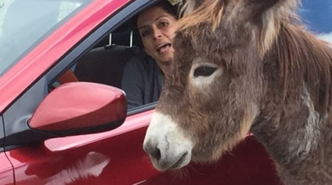 Donkeys are smart - but our gates keep them home